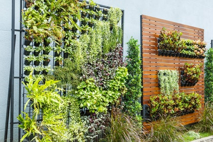 Urban Container Gardening - Vertical Gardens with assorted plants on metal plant wall structure and wood and metal plant and pot holder free-standing wall structure