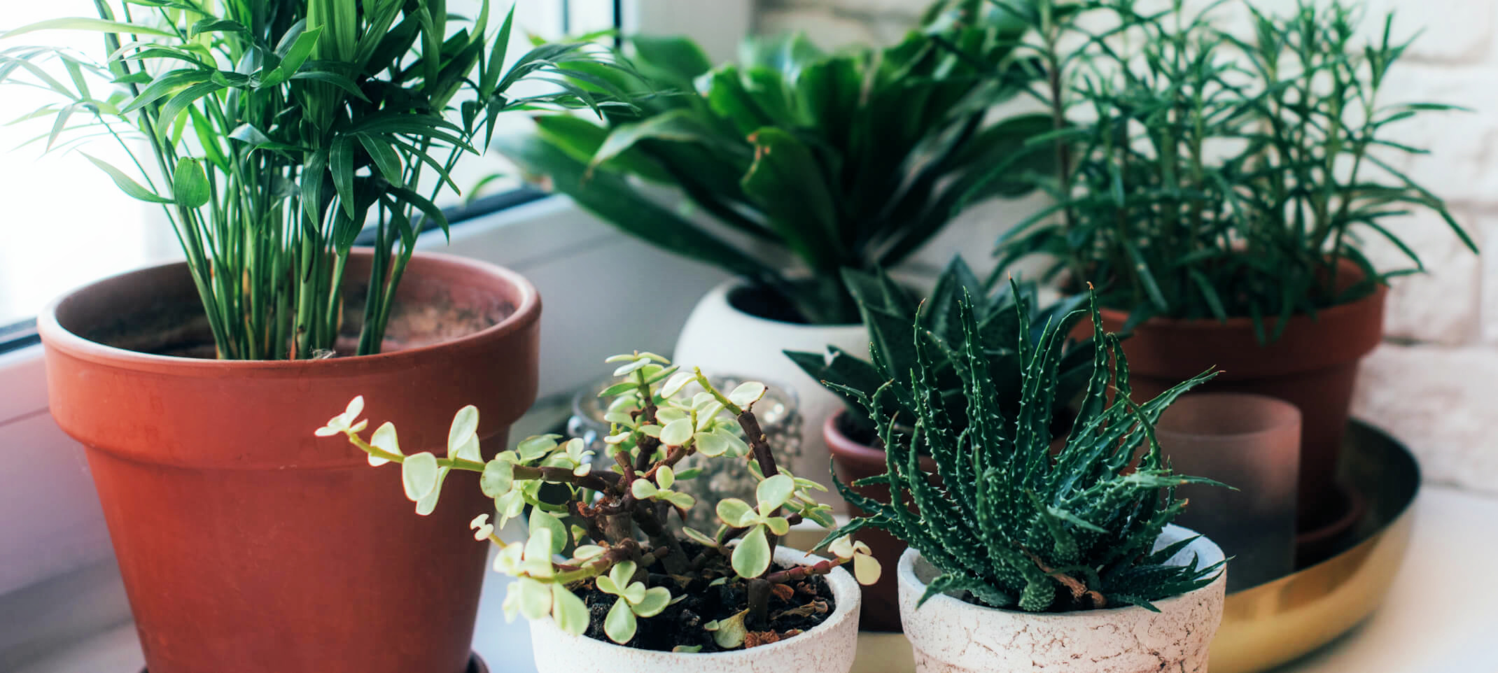 Assorted houseplants in front of a window