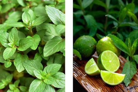 2 images: chocolate mint and mint with limes on cutting board