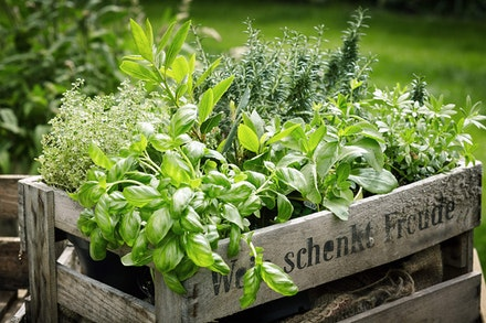 A wooden crate of fresh picked herbs