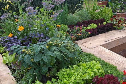 A raised bed veggie and herb garden
