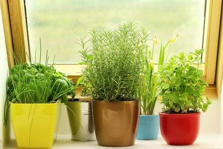 Herbs growing indoors in colorful pots near a window