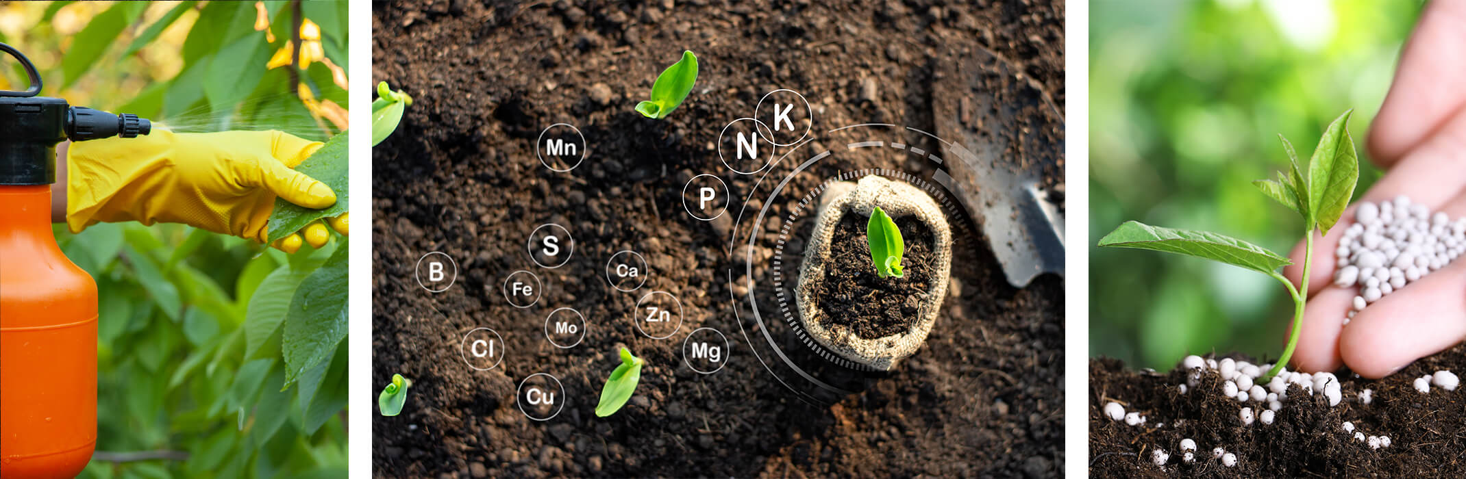 3 images: someone spraying a plant while wearing gloves, new plants planted in fresh soil with one in a burlap sack next to a hand shovel with fertilizer symbols throughout soil, and someone applying round dry fertilizer to a newly planted plant