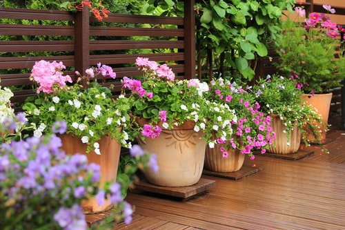 A variety of potted flowers on a patio