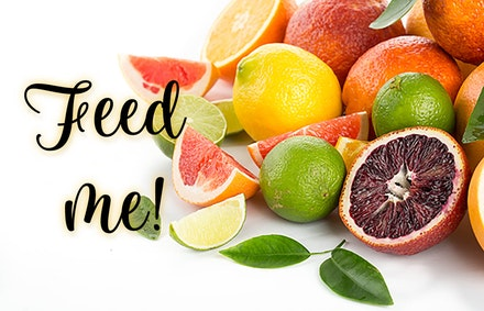 A variety of citrus fruits, isolated on white with the text