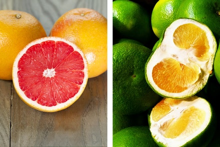 2 images: Ruby Red Grapefruits and Oro Blanco Grapefruits