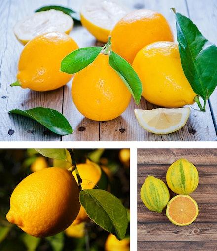 3 images of lemons: top - meyer lemons, left - Lisbon lemons, and right - pink Eureka lemons