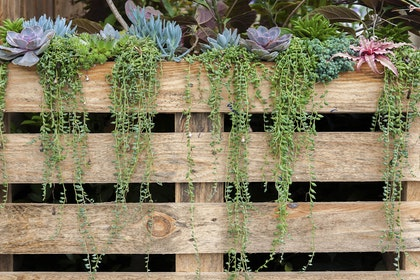 A variety of succulents growing in a vertical wooden planter outside