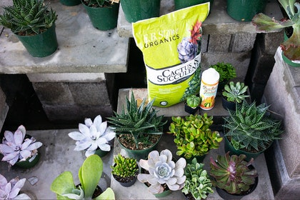 A variety of succulent plants, and a bag of EB Stone Organics Cactus & Succulent soil, and a container of Cactus Juice fertilizer