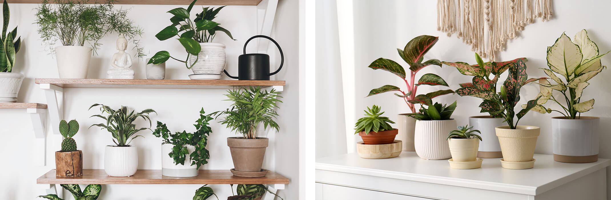 2 images: wooden shelves with a variety of potted houseplants, and a white dresser with a variety of potted houseplants on it and a cream macrame wall hanging in the background
