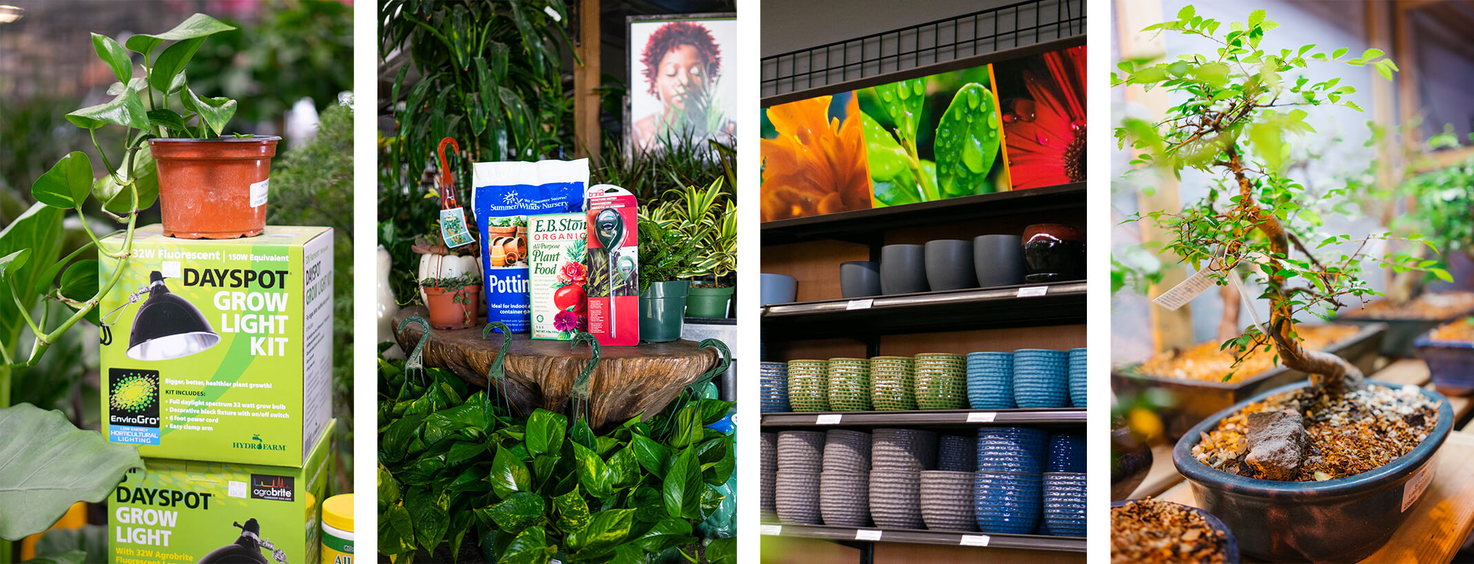 4 images - Dayspot Grow Light Kits on display near houseplants; a variety of houseplants surrounding summerwinds potting soil, eb stone organics all purpose plant food, and a water meter.; shelves filled with colorful indoor pots and signage; and a closeup of a bonsai tree in a bonsai pot