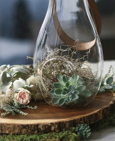 Terrarium sitting on a slice of wood and inside the terrarium is an echevieria and some spanish bella moss?h=700