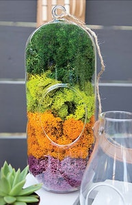 Syndicate home garden bella moss collection  with terrarium glass with 4 different colors of the moss forest green, lime, orange and purple
