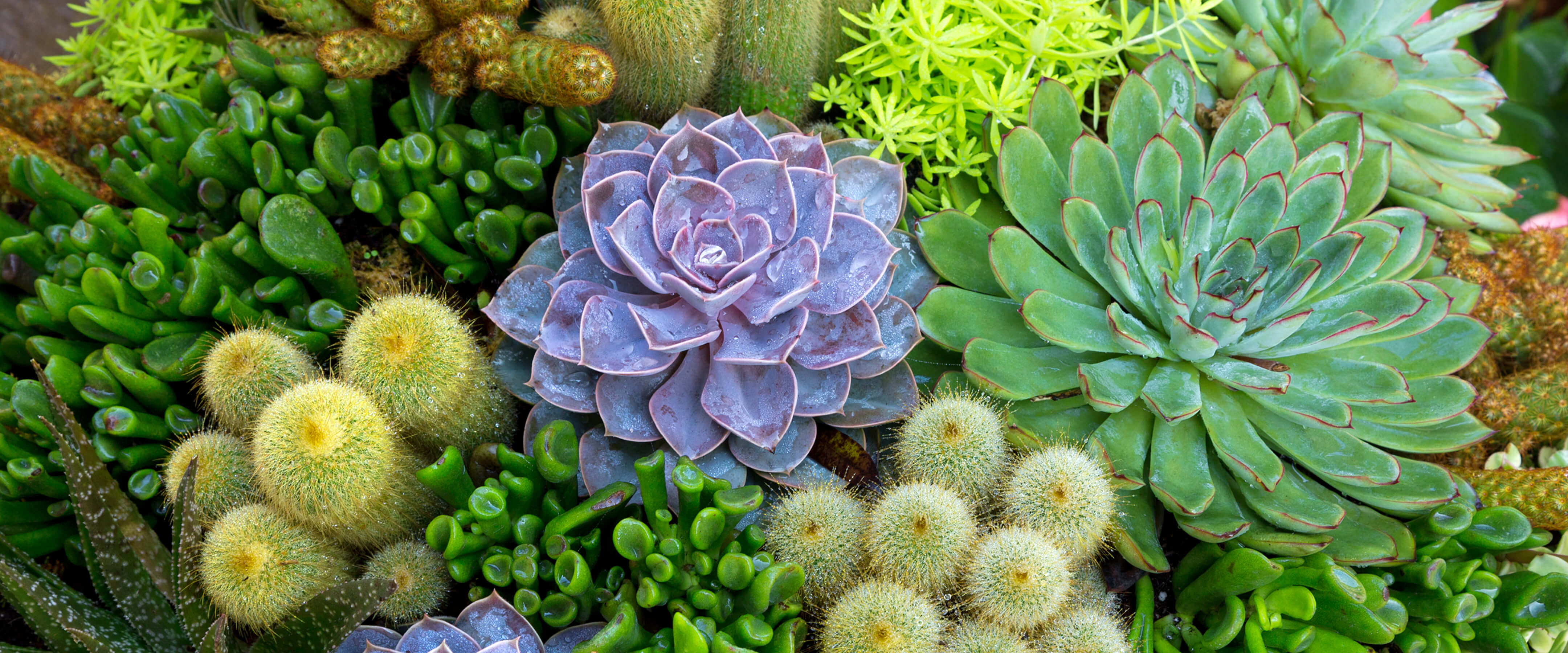 A closeup of a variety of succulent and cactus plants