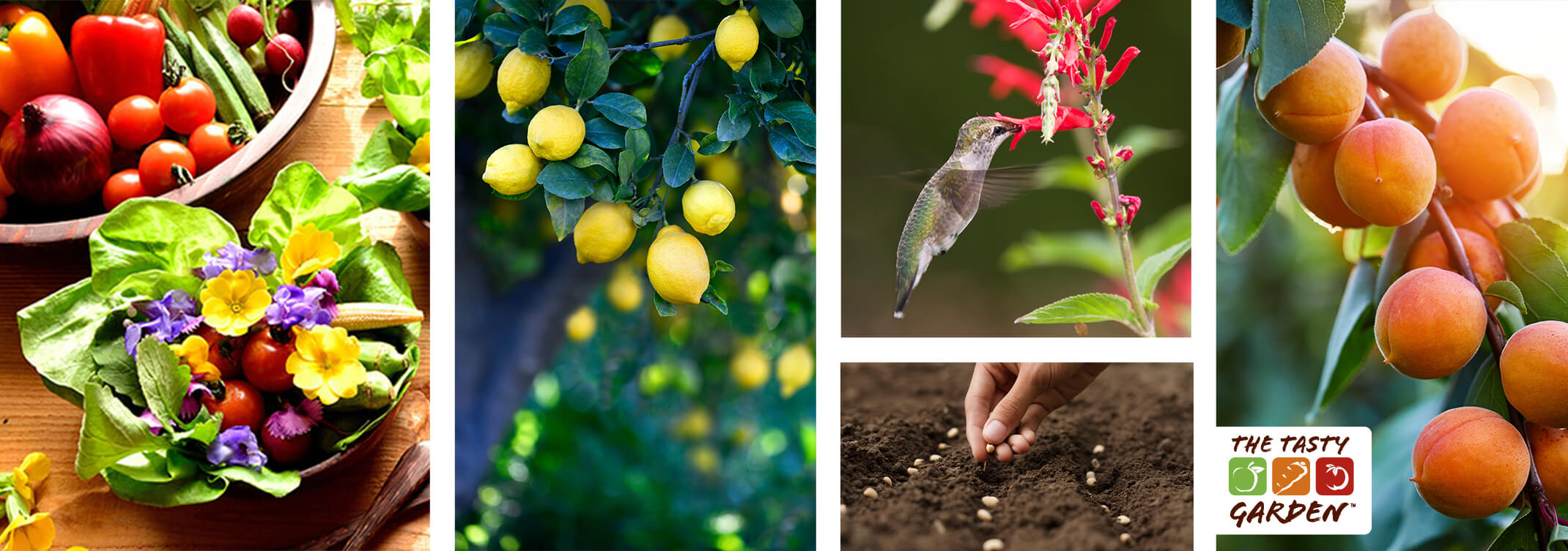 """5 images: a variety of vegetables in a bowl next to a salad with edible flowers; lemons growing on a tree; a hummingbird enjoying pineapple sage blooms; a person planting seeds in the ground; and peaches growing on a tree; and a white box with the text """"The Tasty Garden"""" and its logo"""