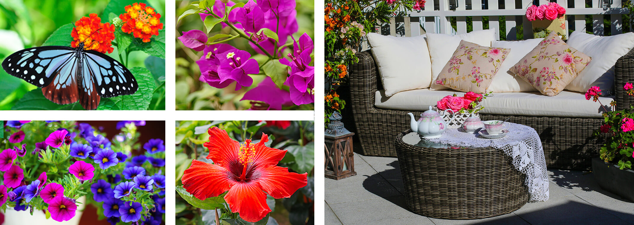 5 images: a butterfly on lantana flowers; petunias, bougainvillea, hibiscus, and a patio with bougainvillea, roses and geraniums next to seating, a tea set and a white fence