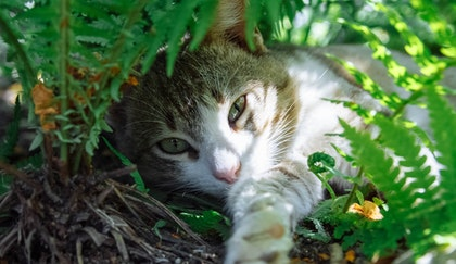 cat lying under fern