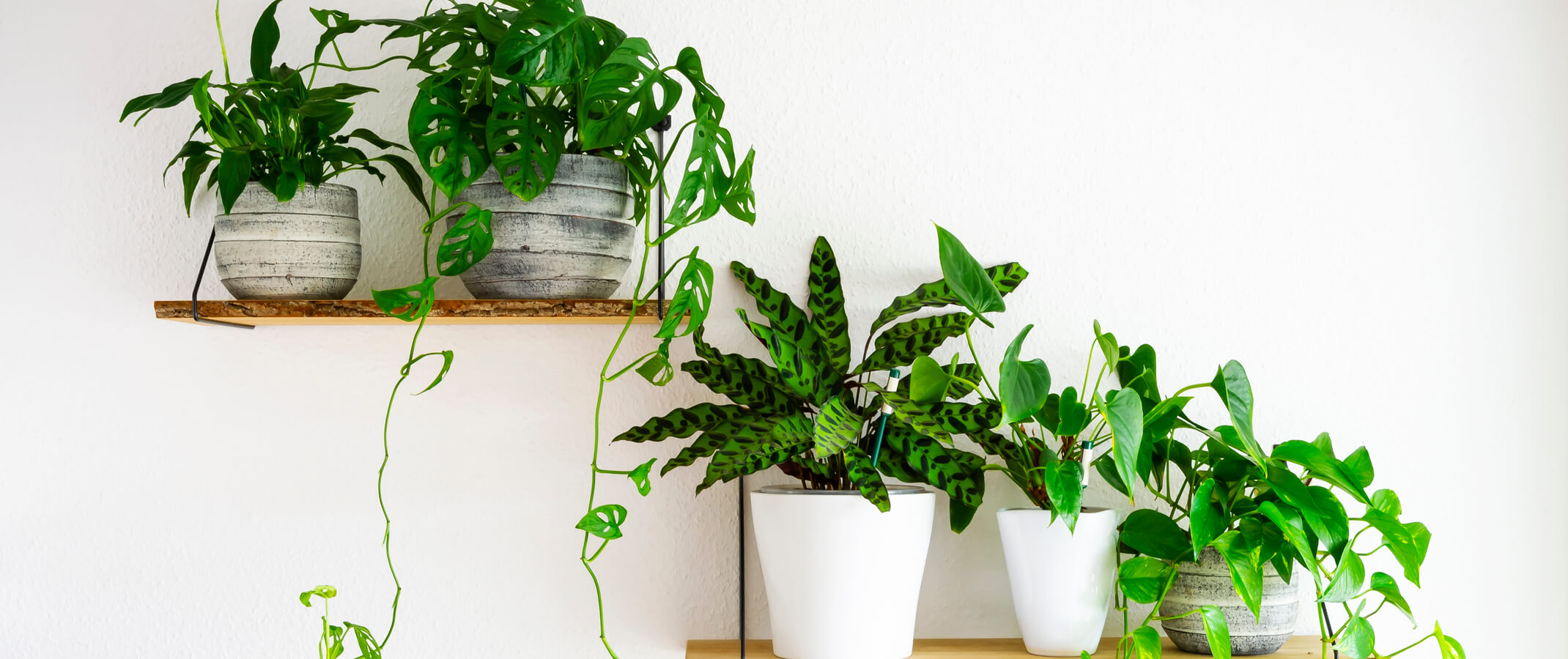 5 different houseplants in pots sitting on wall shelves