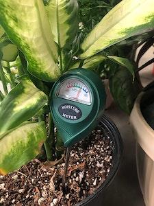 Moisture meter tool stuck inside a houseplant