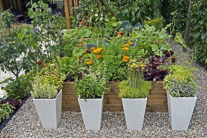 Edible gardening in raised garden beds, in the ground, and in planters