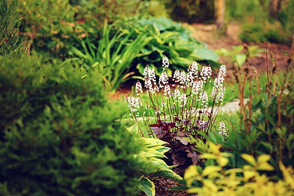 Shade plants in a landscape, including heuchera and hostas