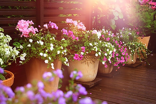 Multiple container gardens in a row with pink and white geraniums and calibrachoas