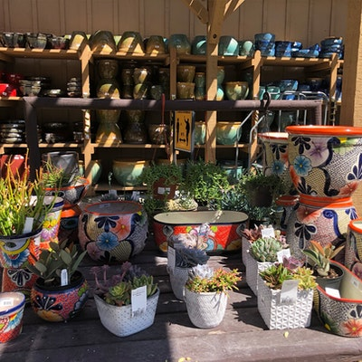 Potted plants outside