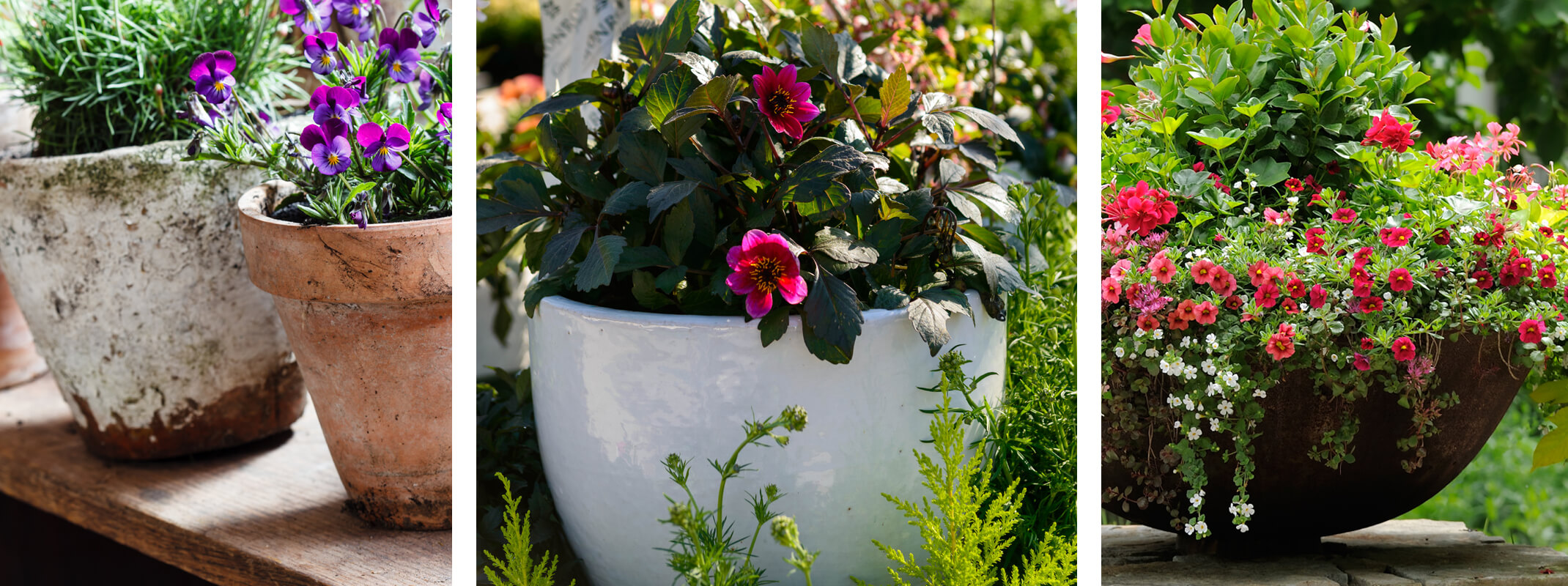 container gardening different kinds of pottery with different types of plants planted inside from terra cotta to white ceramic and mondo grass to pansies and calibrachoa