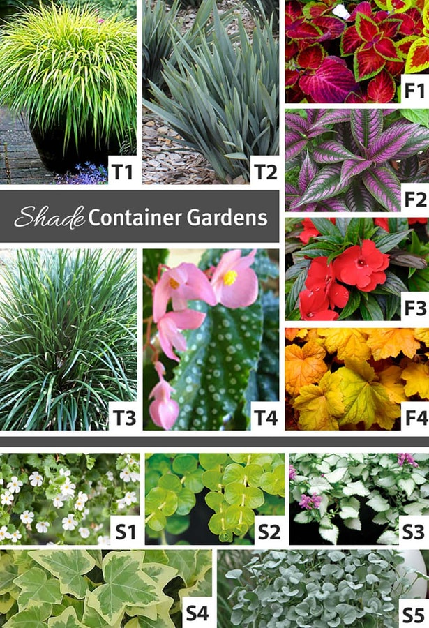 Shows an assortment of plants that thrive in shade for container gardens