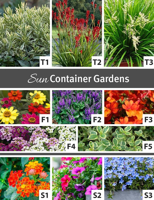 Shows an assortment of plants that thrive in sun for container gardens