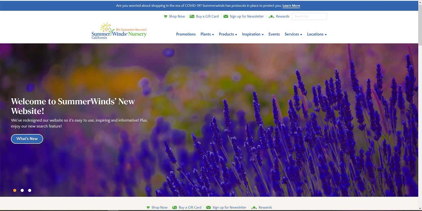 A screenshot of SummerWinds Nursery's California Home Page of newly designed website