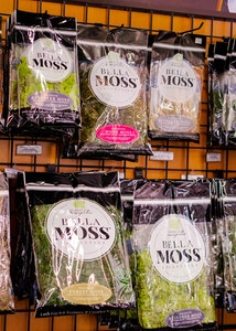 wall display of an assortment of bella moss collection