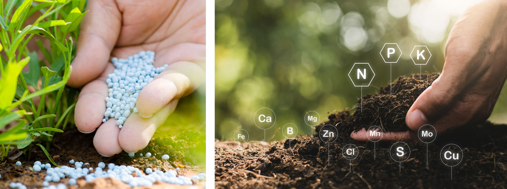 2 images of a person pouring fertilizer onto the dirt in the garden and a second image of a hand holding up dirt in the garden with elements of the soil, showing all around