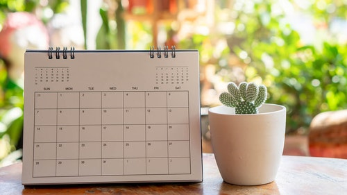 calender with no month indicated sitting on table next to white coffee cup with cactus planted inside and beautiful plants blurred in the background