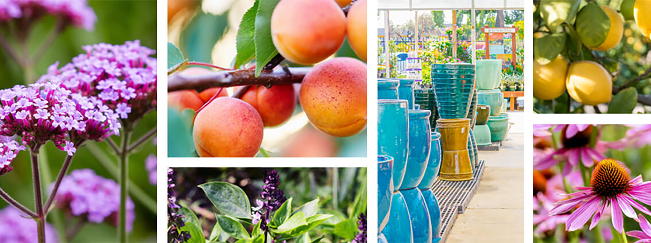 multiple images to show plants, fruit trees, herbs, pottery for the new SummerWinds locations in Novato and Dublin