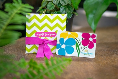SummerWinds gift card and gift envelop on table surrounded by houseplants