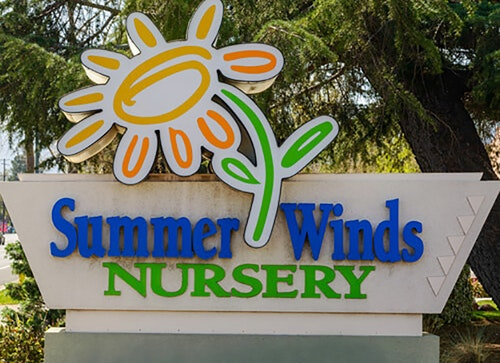 SummerWinds Nursery monument sign with evergreen tree in the background