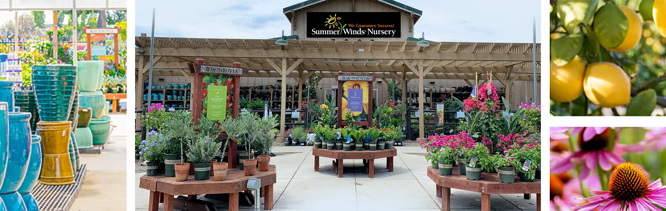 4 images of pottery, dublin summerwinds store front location, lemon tree and echinacea plant