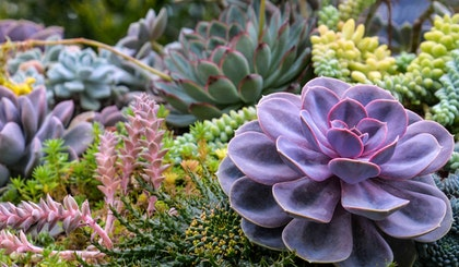 An assortment of succulents with different shapes, colors and textures all planted together