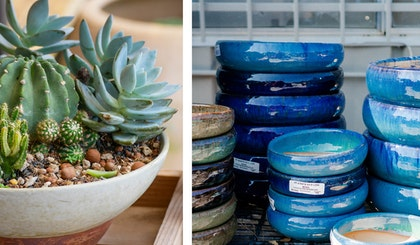succulents and cactus in low bowl pot with decorative rocks and a second image of low bowl pots in blue and beige