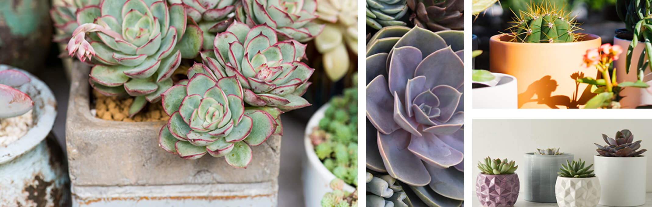 succulents in rustic containers, assorted succulents, cactus in peach and pebble pottery and single succulents in modern pots