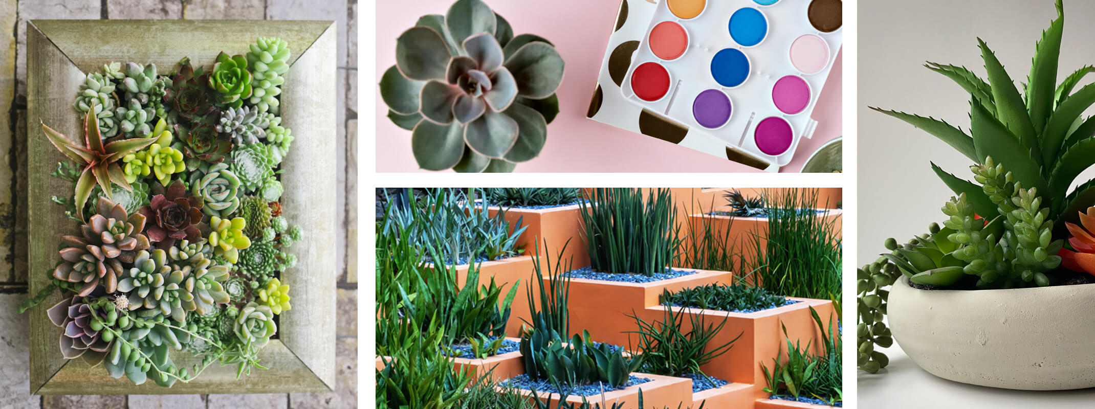4 images succulents in frame second image of succulent next to paints third image of tiered  rock garden with plants and succulents planted and a forth image of a white bowl with succulents