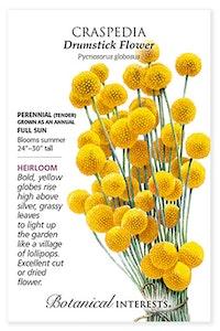 botanical interests craspedia drumstick flower heirloom seed packet