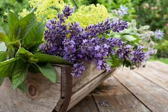 A variety of fresh picked herbs in a wooden basket on a wooden table outside