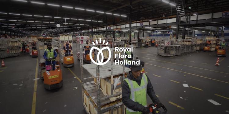 Bloemenveiling Royfal FloraHolland