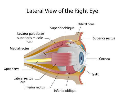 Beverly Hills Ophthalmology Blog | Cornea Transplant Procedure