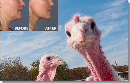 Holcomb - Kreithen Blog | How to Carve a Turkey (Neck) Without a Knife