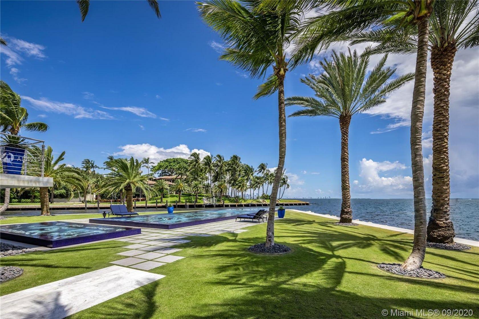 summer grass plant tropical palm tree tree arecaceae
