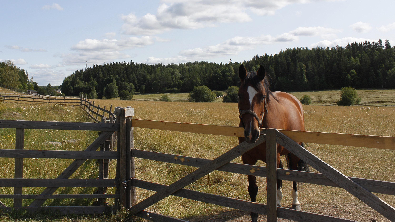 Kuvassa hevonen aitauksessa, taustalla Kuralan kylämäen niittymaisema