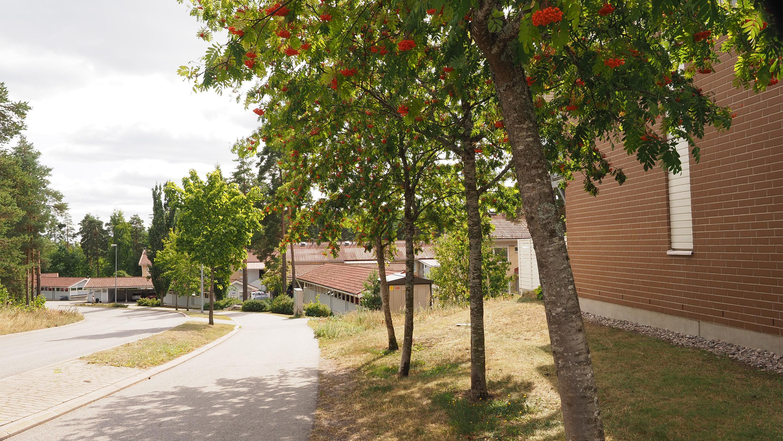 Kuvassa punatiilisiä vuokrarivitaloja rinteessä Pääskyvuoressa